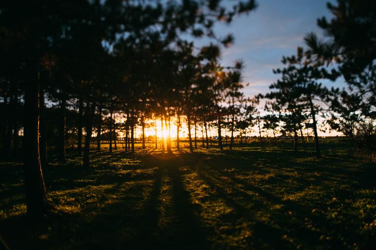 coucher de soleil entre les arbres